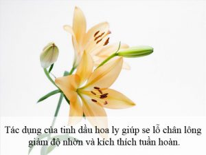 tinh dau hoa ly